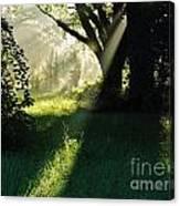 Super Sunbeam Canvas Print