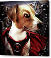 Superdog Canvas Print
