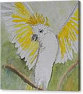 Suphar Crested Cockatoo Canvas Print