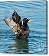 Surf Scotter Male Wings Canvas Print