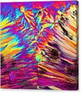 Surfin' Safari Canvas Print
