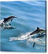 Surfing The Wake Canvas Print