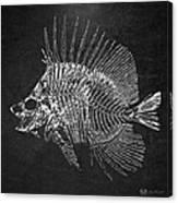 Surgeonfish Skeleton In Silver On Black  Canvas Print