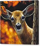Whitetail Deer - Surprise Canvas Print