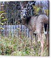 Surprised Deer Canvas Print