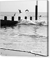 Surprised Seagulls Canvas Print
