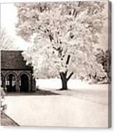 Surreal Dreamy Ethereal Winter White Sepia Infrared Nature Tree Landscape Canvas Print