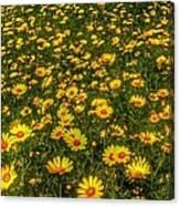 Surreal Spring Canvas Print