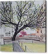 Survivor Tree Canvas Print