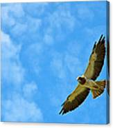 Swainson's Hawk Snake River Birds Of Prey Natural Conservation Area Canvas Print
