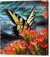 Swallow Tail Butterfly Posing Canvas Print