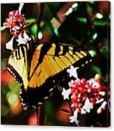 Swallowback Butterfly # 1 Canvas Print