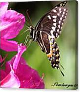 Swallowtail And Azalea - Love Canvas Print