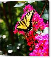 Swallowtail Beauty  Canvas Print