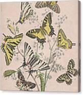 Swallowtail Butterflies - Papilionidae Canvas Print