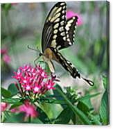 Swallowtail Butterfly 01 Canvas Print