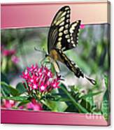 Swallowtail Butterfly 03 Canvas Print