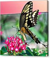 Swallowtail Butterfly 04 Canvas Print
