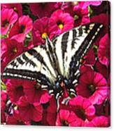 Swallowtail Butterfly Full Span On Fuchsia Flowers Canvas Print