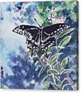 Swallowtail Butterfly Canvas Print