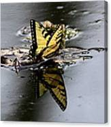 Swallowtail - Butterfly - Reflections Canvas Print