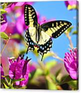 Swallowtail In Flight Canvas Print