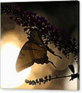 Swallowtail Light Canvas Print
