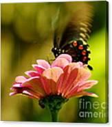 Swallowtail Motion Canvas Print