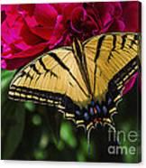 Swallowtail On Peony Canvas Print