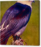 Swallowtail Pose Canvas Print