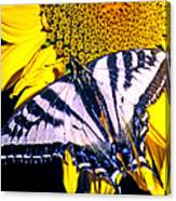 Swallowtail Sunflower Canvas Print