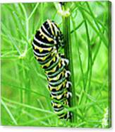 Swallowtail To Be Canvas Print