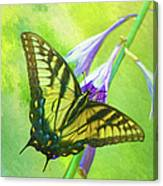 Swallowtail Visits Hosta Flowers Canvas Print