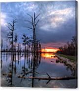 Swamp At Dusk Canvas Print