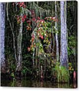 Swamp Beauty Canvas Print