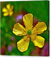 Swamp Buttercup Near Loon Lake In Sleeping Bear Dunes National Lakeshore-michigan  Canvas Print