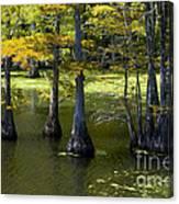 Swamp Color Canvas Print