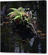 Swamp Fern Canvas Print