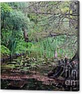 Swamp Garden Canvas Print