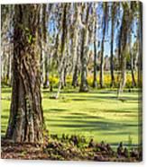 Swamp In Magnolia Plantation And Gardens Charleston Sc Canvas Print