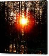 Swamp Light Canvas Print