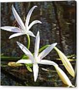 Swamp Lily Canvas Print