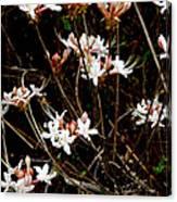 Swamp Pretties Canvas Print