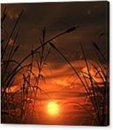 Swamp Sunset  Canvas Print
