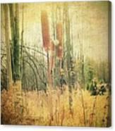 Swampy Canvas Print