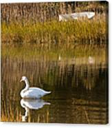 Swan And Boat 2 Canvas Print