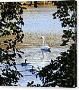 Swan And Ducks Through Trees Canvas Print
