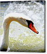 Swan - Beautiful - Elegant Canvas Print