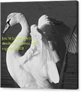 Swan Black And White Canvas Print