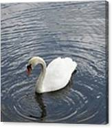 Swan Circles Canvas Print